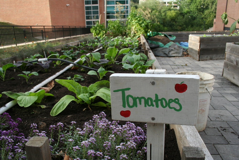 The finished tomato bed lays with fresh compost at the end of the work hour in the Public Health Garden on Sept. 28, 2015. Work hours run throughout the semester on Mondays and Thursdays from 4 p.m. to 5 p.m. Each day focuses on a new task and no experience is necessary.
