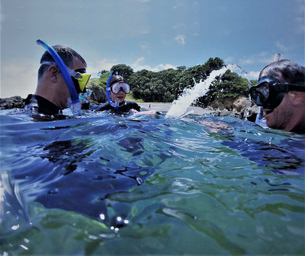 Mount Maunganui Snorkeling Adventure   Explore the unique marine environment of the Mount and the many forms of life that exist beneath the surface.   Read More