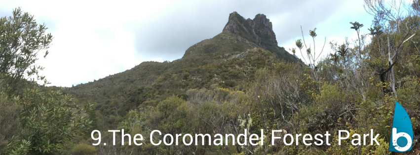 coromandelforestparkpinnacles