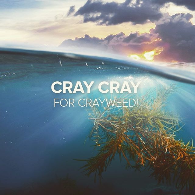 FInd out more about Operation Crayweed #underwatergardener