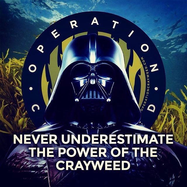 The force is strong with Operation Crayweed #underwatertree #usetheforce