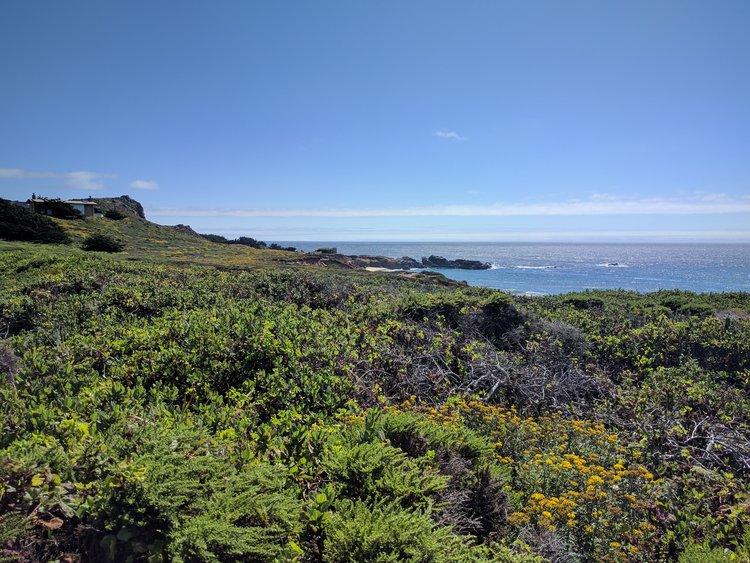 Coast!