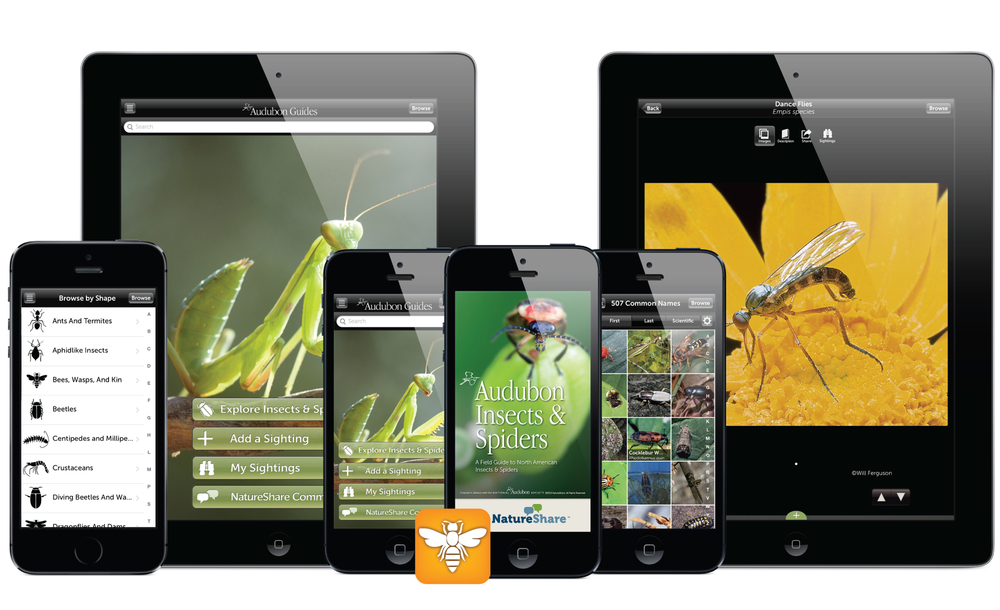 Audubon Insects & Spiders for iOS