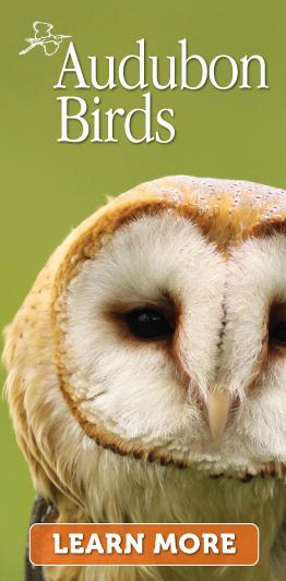 Banner Ad for Audubon.com