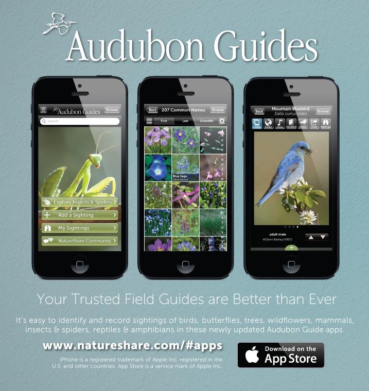 Print Ad for Audubon Magazine