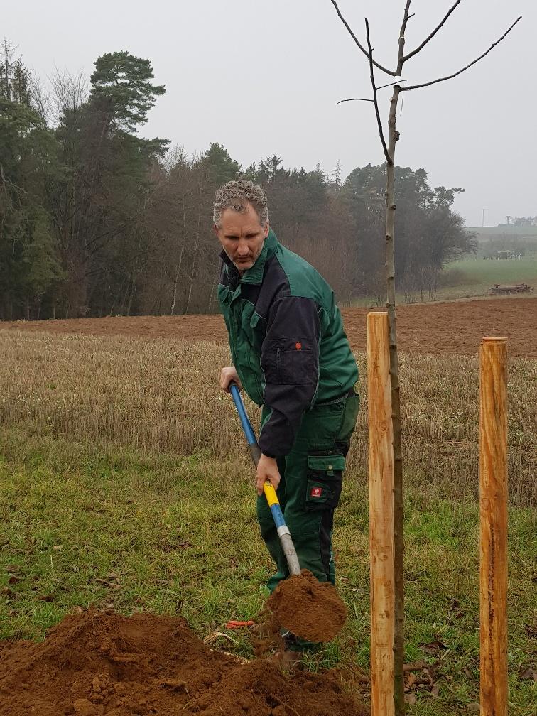 Der Gravensteiner wurde von Stephan selbst gepflanzt!