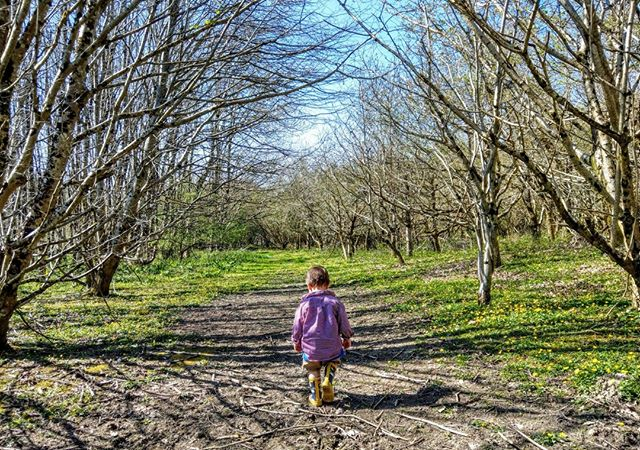 Our woodland walk is enjoyed by all ages  https://www.knowle-farm.co.uk #knowlefarm #devon #selfcatering #southdevon #holidaycottages #childfriendly #babyfriendly #toddlerfriendly #familyfriendly #cottages #familyholiday #farm #holiday #woodland #metime #sunnyday