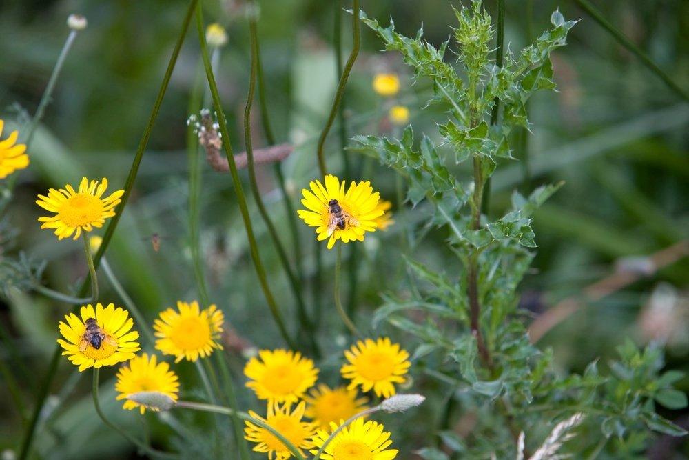 Siebers-Tuinprojecten-Tuin-Hovenier-bloemenweide.jpg