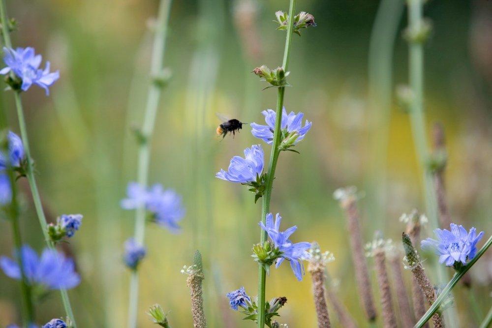 Siebers-Tuinprojecten-Tuin-Hovenier-Hommel-bloemweide.jpg