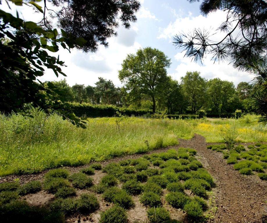 Siebers-Tuinprojecten-Tuin-Hovenier-Natuurlijk-tuin-heide-bloemweide.jpg