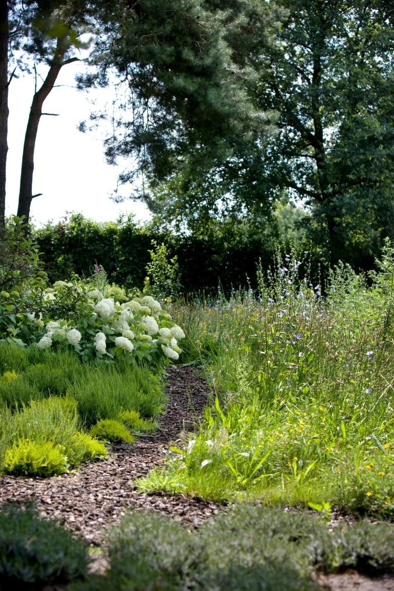 Siebers-Tuinprojecten-Tuin-Hovenier-Schors-bloemweide-hortensia.jpg