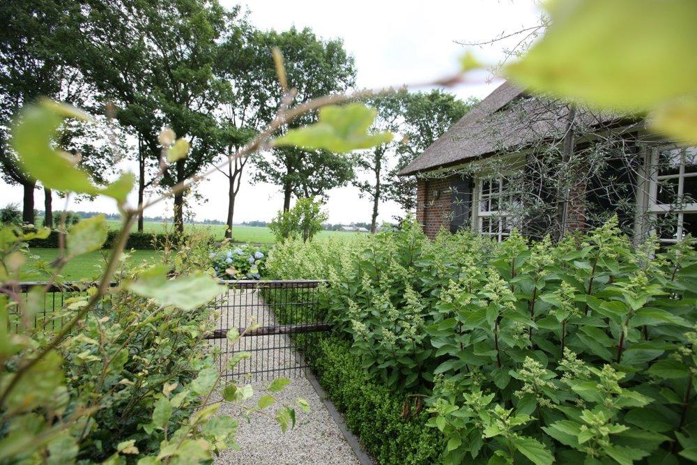 siebers-tuinprojecten-weelderige-hortensias.JPG
