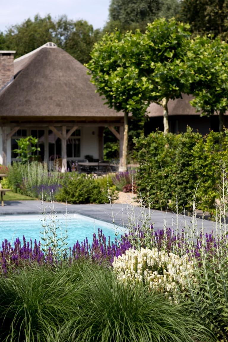Siebers-Tuinprojecten-Tuin-Hovenier-Boerderij-Rietenkap-Pastel-zwembad-landelijke-tuin-haag.jpg