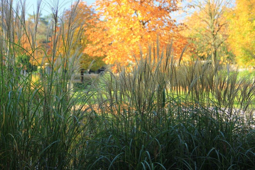 siebers-tuinprojecten-herfsttuin-siergrassen-parktuin.jpg