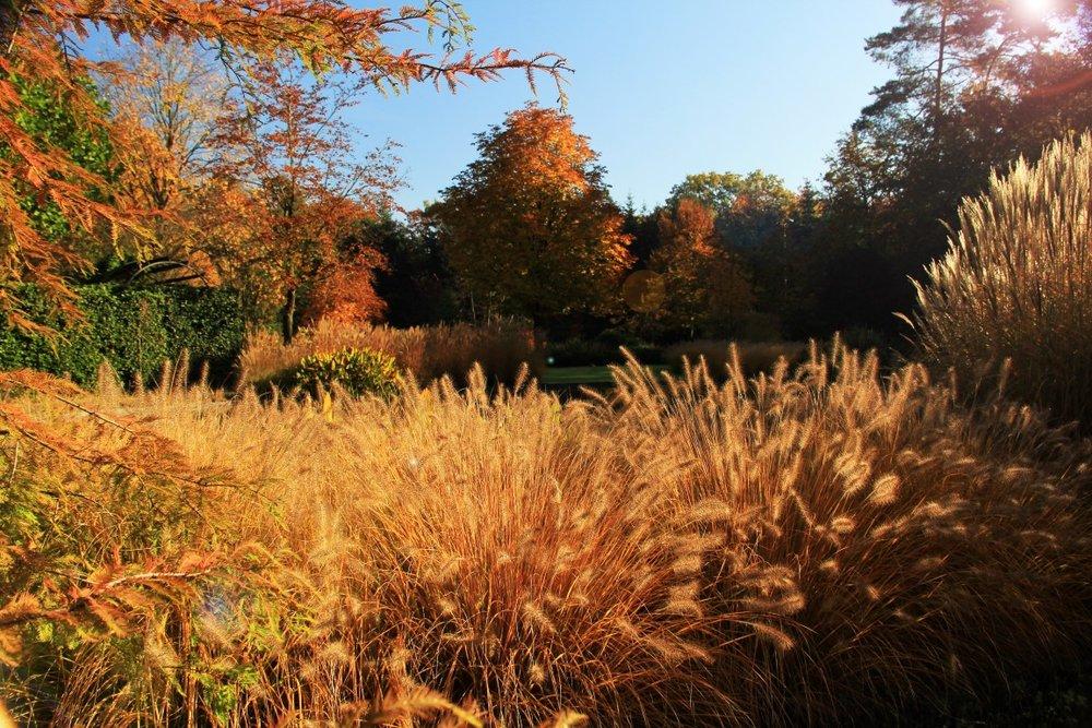 siebers-tuinprojecten-herfsttuin-siergrassen.jpg