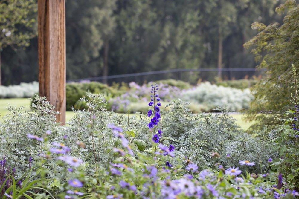 siebers-tuinprojecten-weelderig-landleven-herfstaster.jpg
