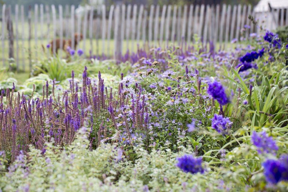 siebers-tuinprojecten-weelderig-landleven-plantcombinaties.jpg