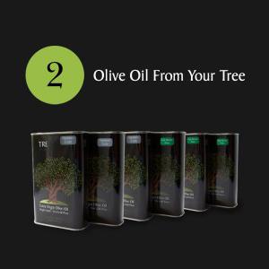 Tre Olive Adopt 4.jpg