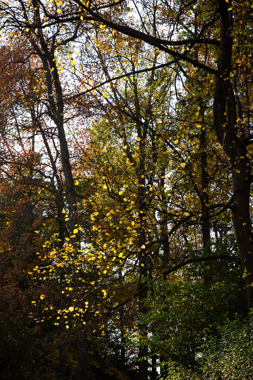 trees 365-1.jpg