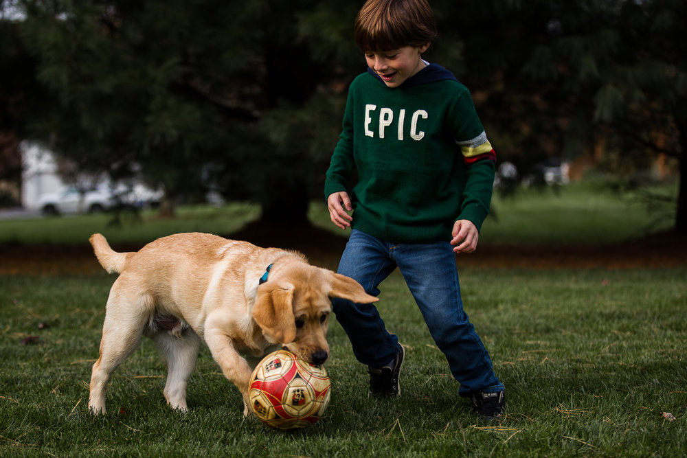 boy playing with his lab puppy and soccer ball in back yard