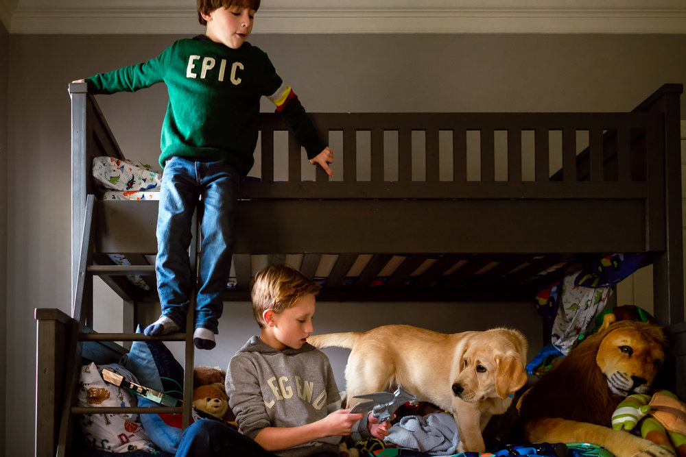boys and their golden labrador playing on bunkbeds