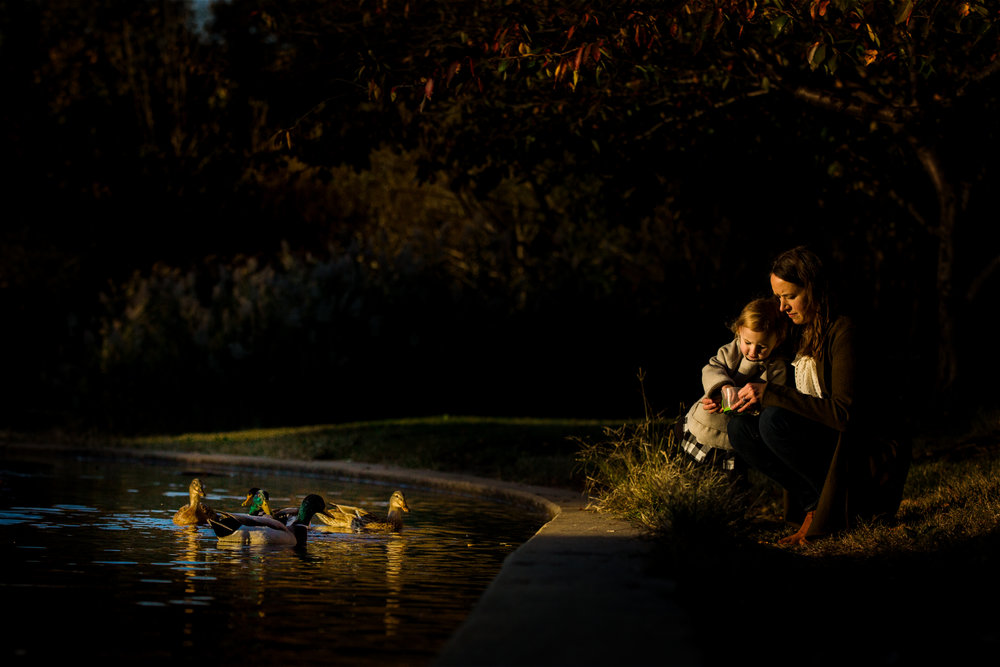 golden lit ducks are fed by little girl and her mother