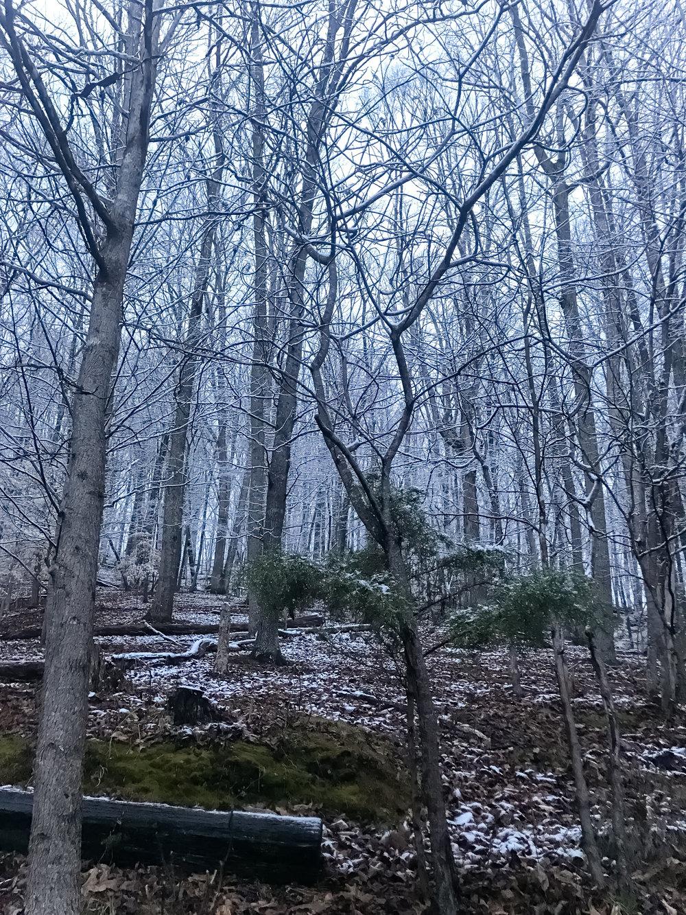 Snow-3748.jpg