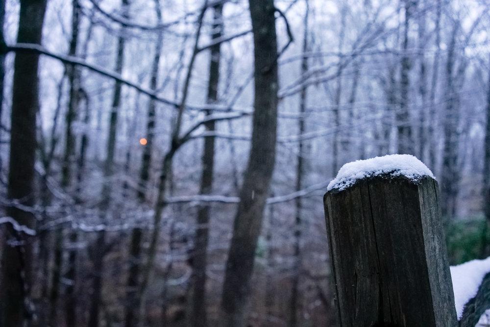 Snow-03792.jpg