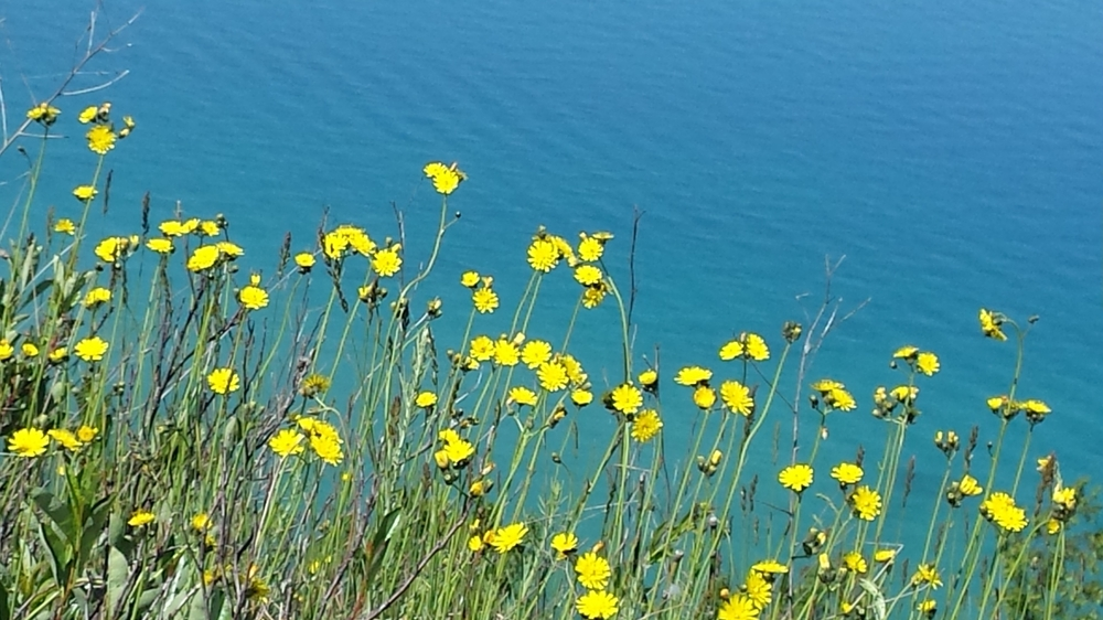 Lake Michigan, flowers