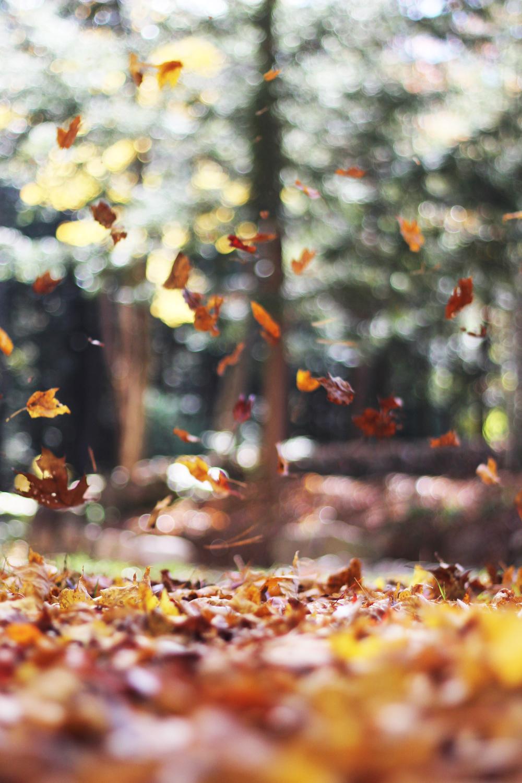 Leaves_LGBT+_poetry