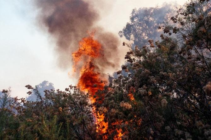 Jamie Hladky, Fire