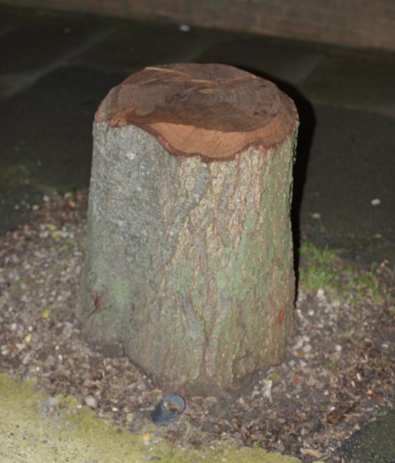 A tree stump, Alexander Norton, 2015