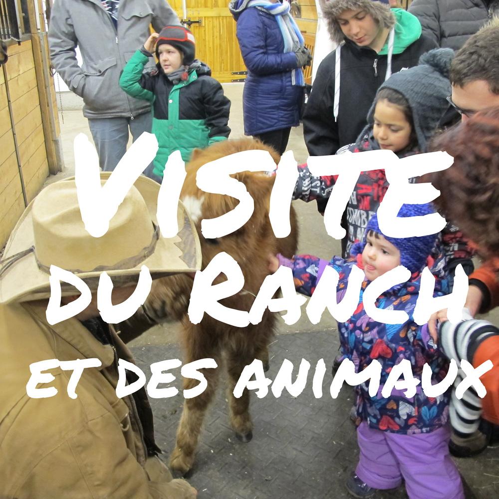 Visite du ranch et des animaux.jpg