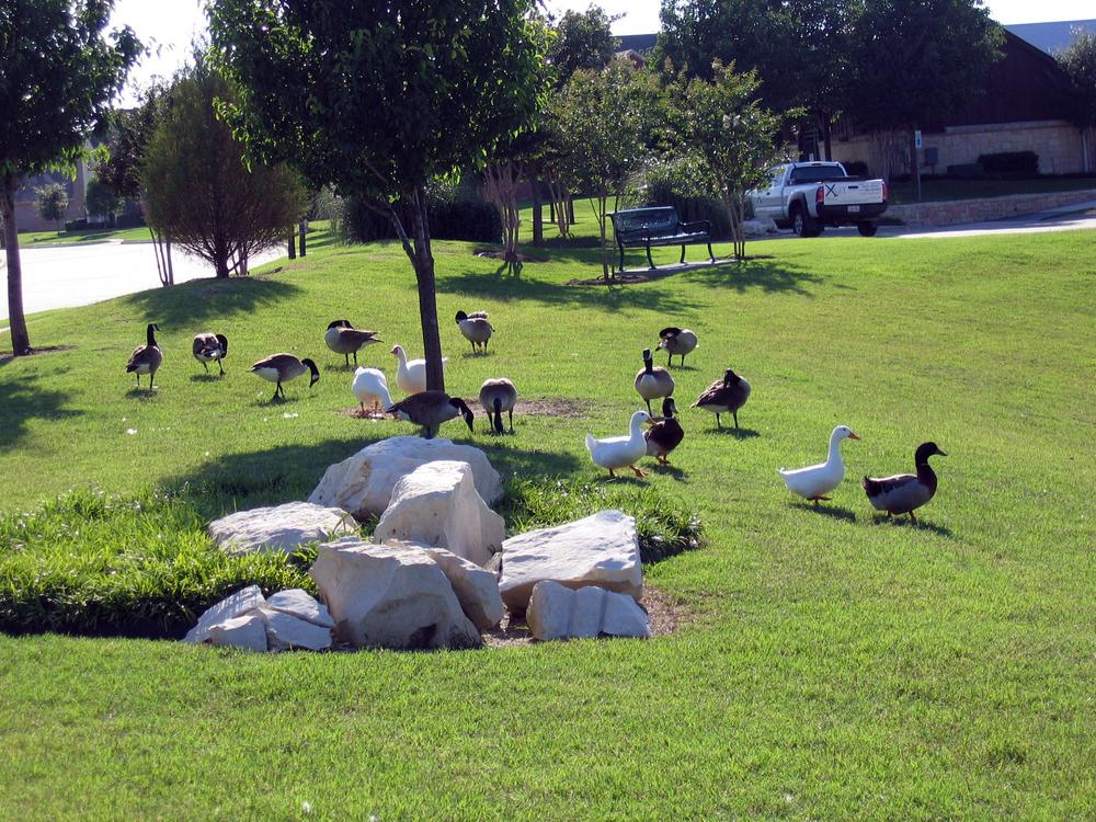 3_Ducks.JPG