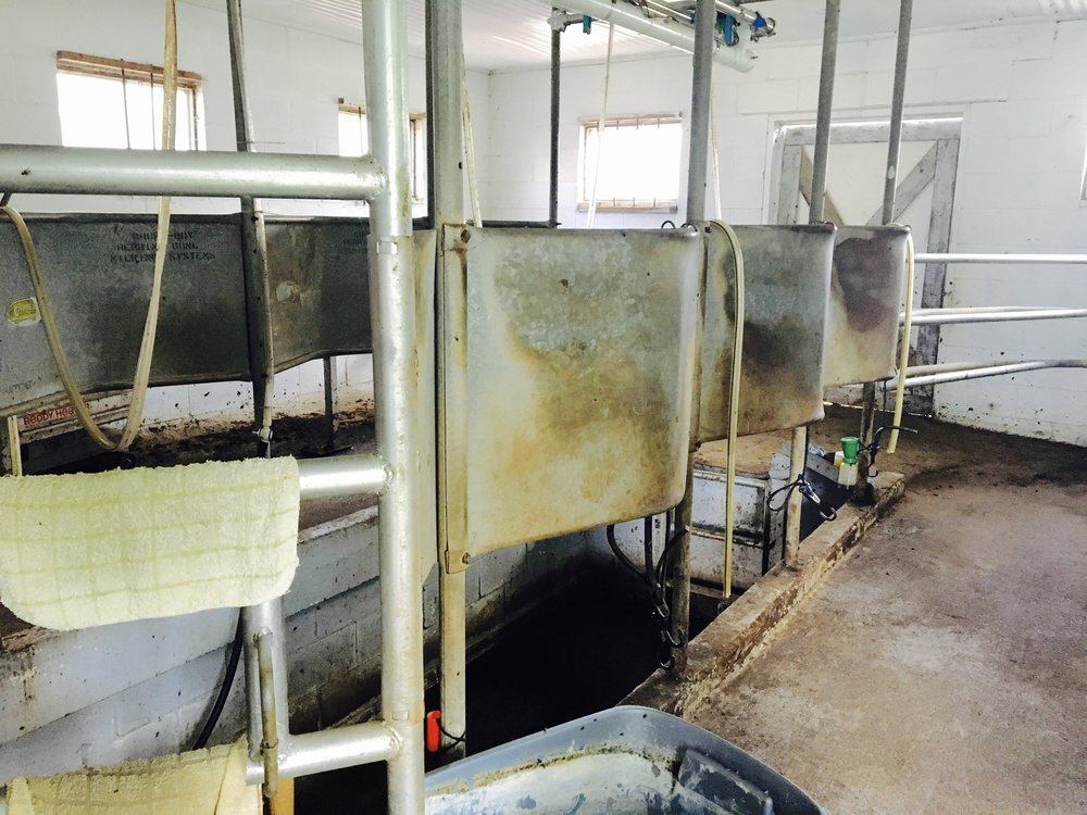 HIDAY FARM - MILKING STATION FOR 4 COWS