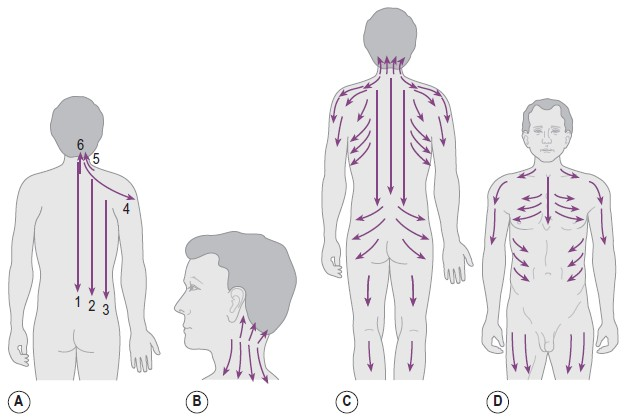 Gua sha scraping directions diagram