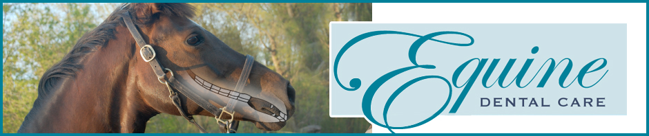 Equine Dental Care Virginia