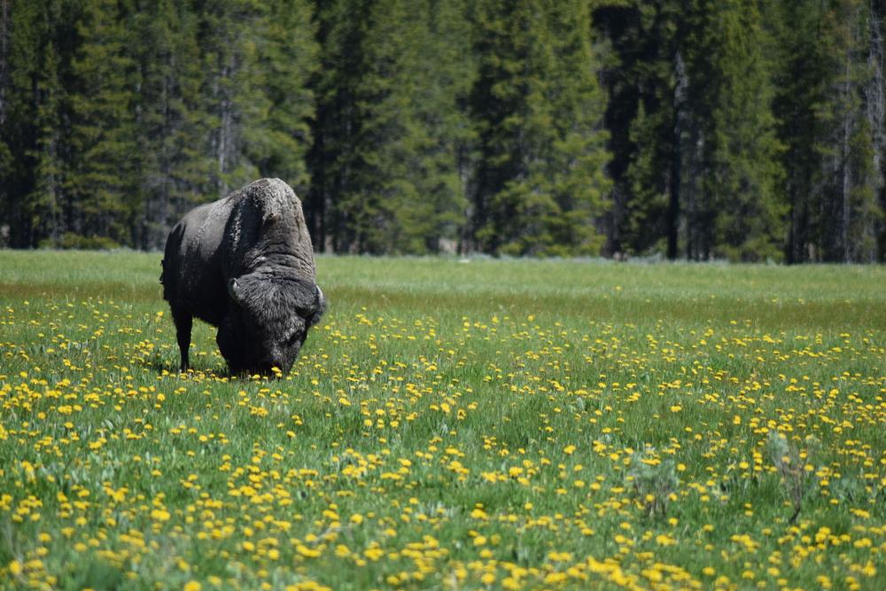 Summer Wildlife Tours