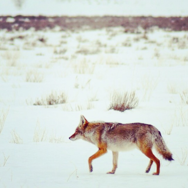 Winter in Grand Teton National Park