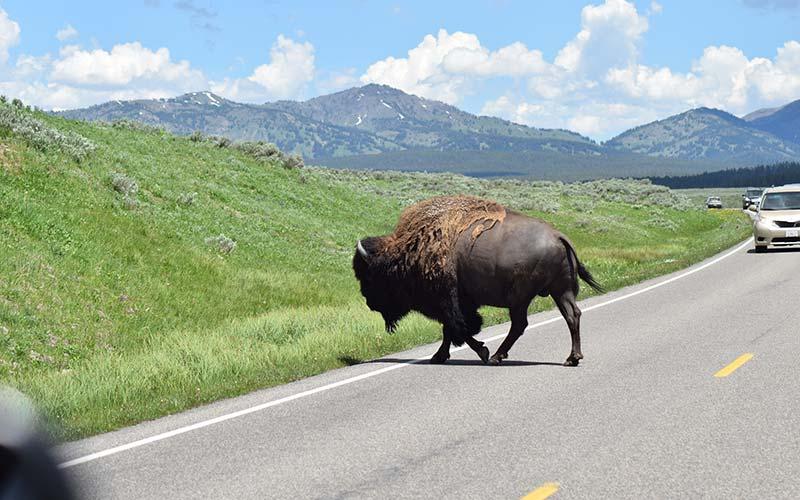 Yellowstone National Park Tours
