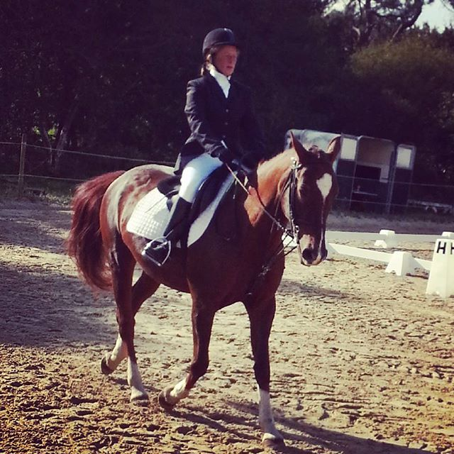 #harasdelukos #dressage #equitation #equestrian #cavalier #chevaux #horse #ridinghorses