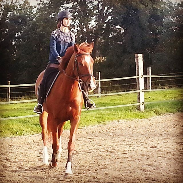 #harasdelukos #horse #dressage #equitation #equestrian #tazdelukos #cavalier #cheval #elevage #insta