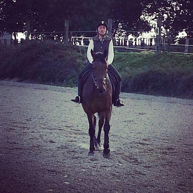 #scipiondelukos #harasdelukos #equitation #equestrian #dressage #cavalier #ridinghorses #chevaux #horse