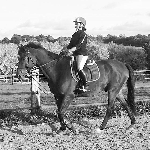 #harasdelukos #horse #dressage #equitation #equestrian #camarondelhuisne #cavalier #cheval #elevage #insta