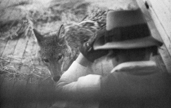 """In 1974, Joseph Beuys spent three days in a room with a wild coyote for his performance, """"I Like America and America Likes Me""""."""
