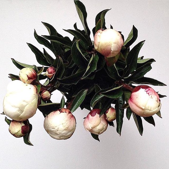 The beauty of peonies 🌸 via @blush_flowers ps if you haven't checked out this flower shop, you MUST! It's one of a kind.