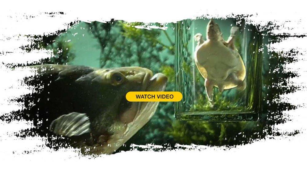 video-bombshell-fishing.jpg