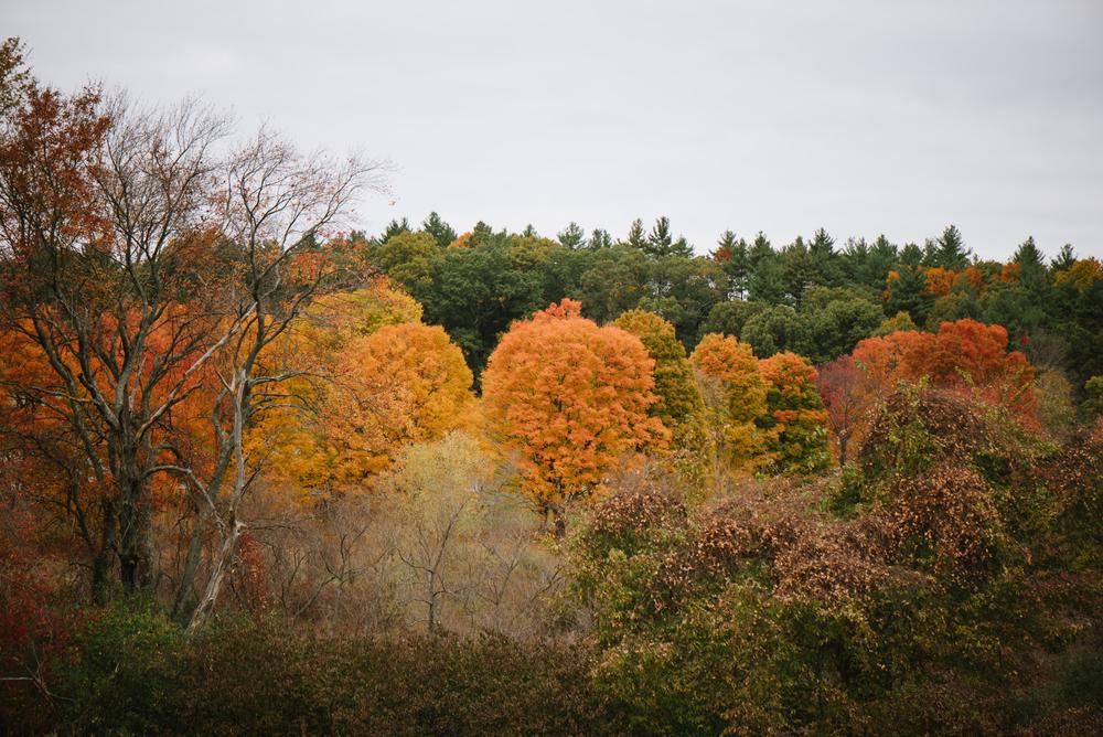 Autumn-2015-33.jpg