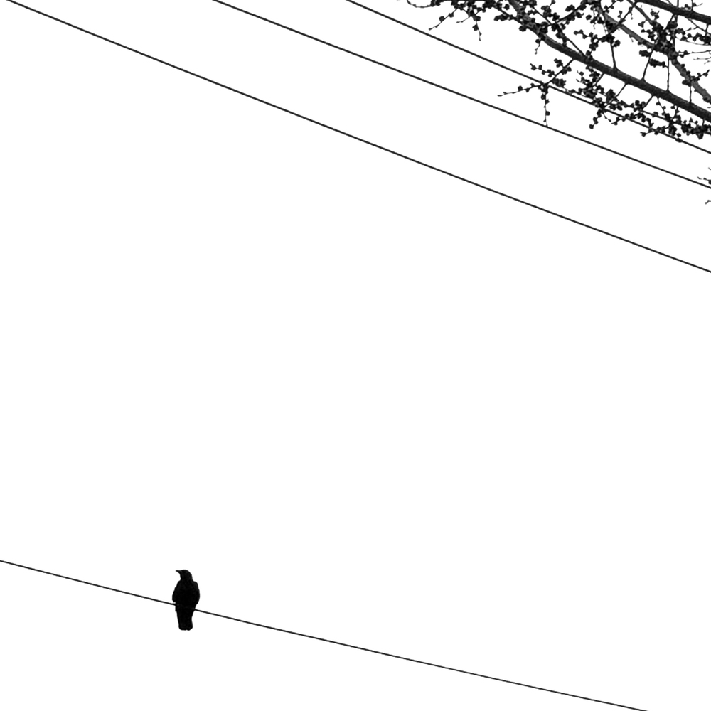 1SINGLEBIRD7x7.jpg