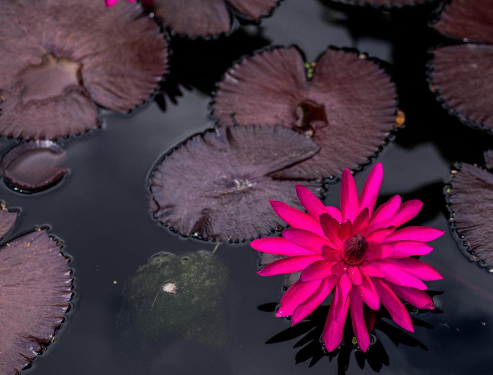003_botanic.jpg